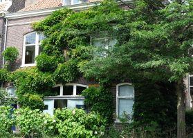 Groen tegen hitte (en andere tips voor een koele woning)